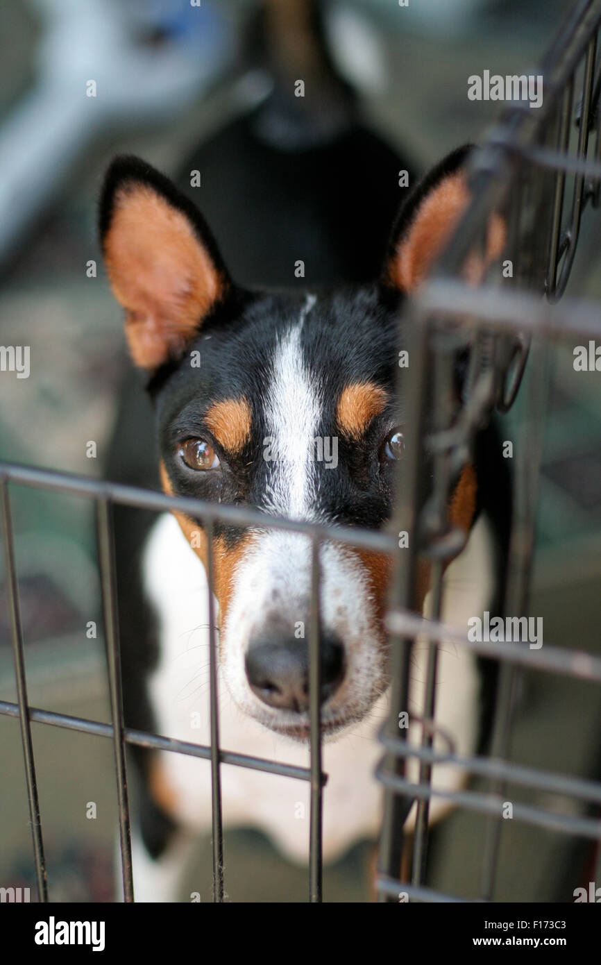 Dog in cage looking at camera point of view from above Stock Photo