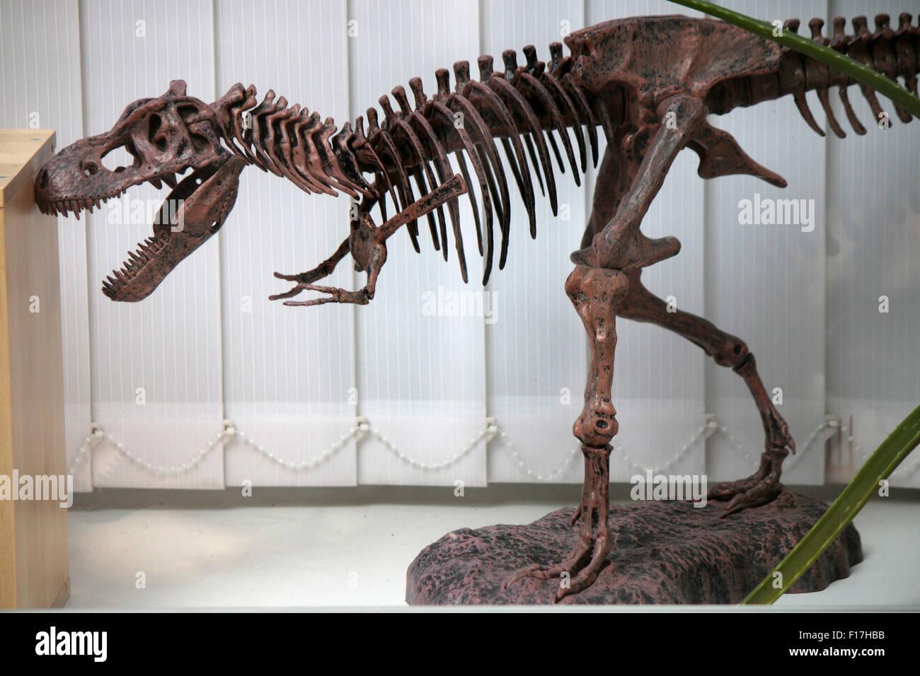 Modell eines Dinosaurier-Skeletts, Berlin. - Stock Image