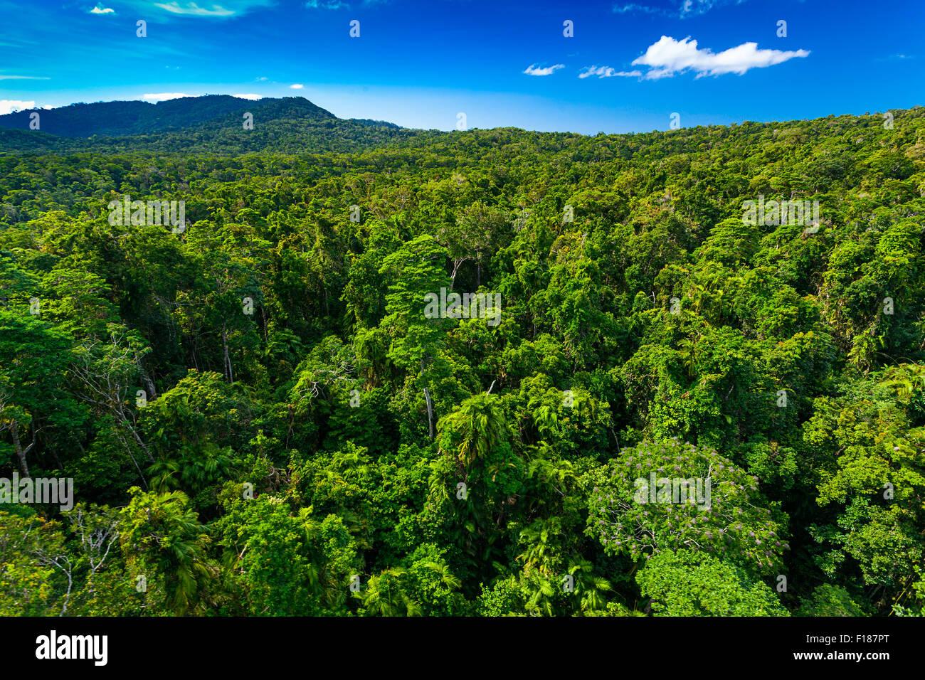 Rain forest from air near Kuranda, North Queensland, Australia - Stock Image