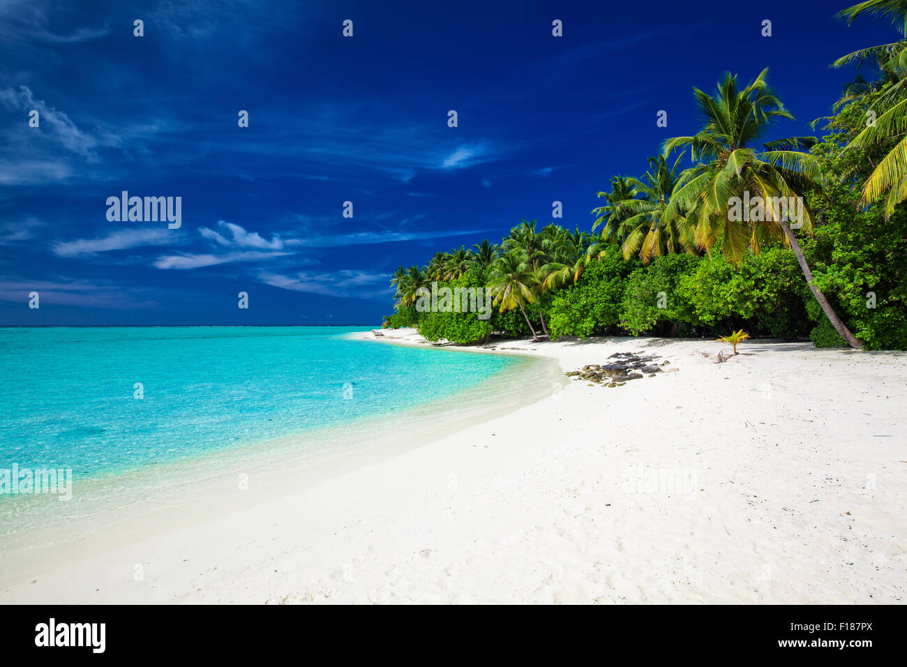 Amazing beach on a tropical island with palm trees overhanging lagoon - Stock Image