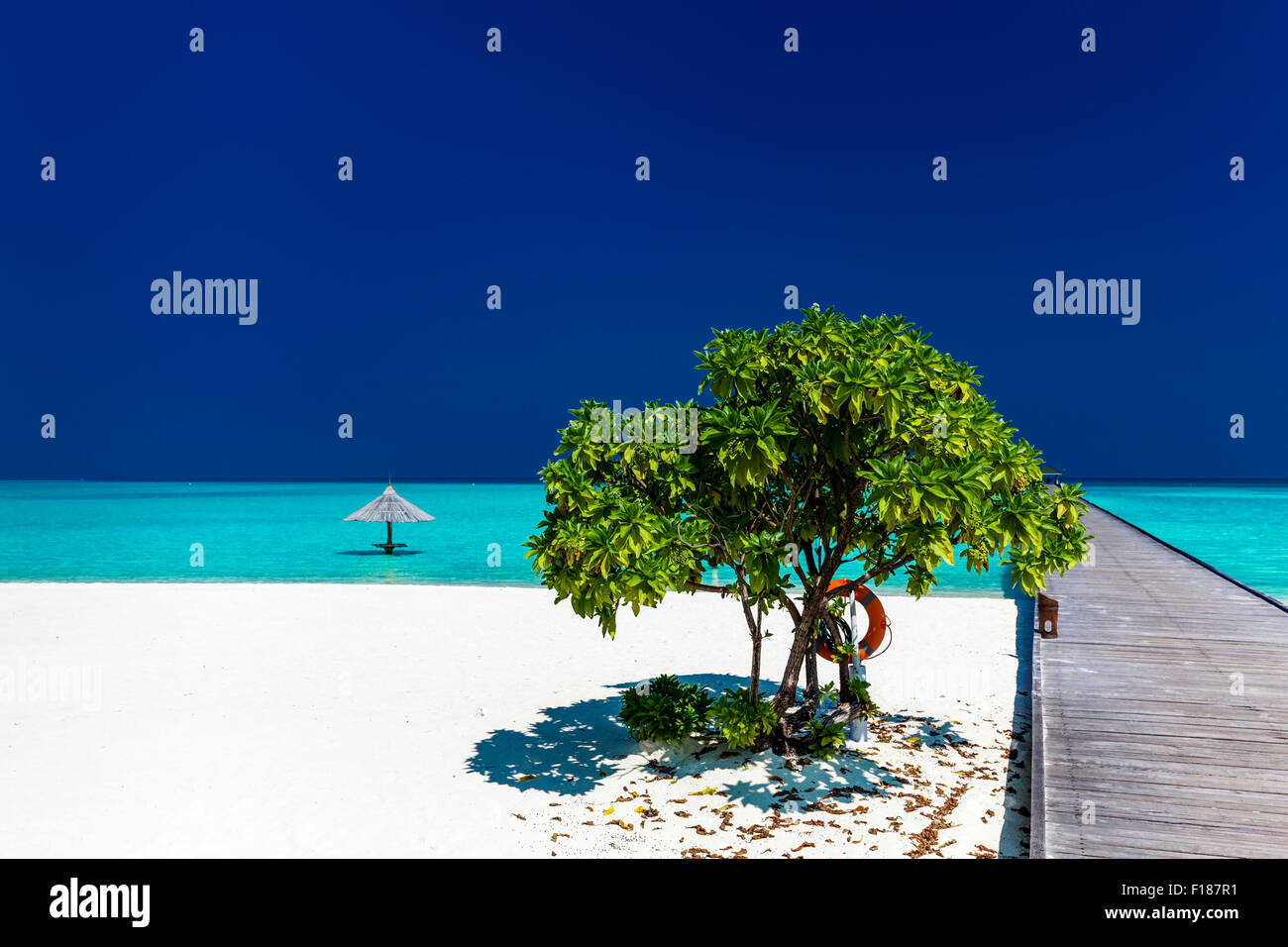 Beautiful tropical sandy beach with wodden jetty and single small tree - Stock Image