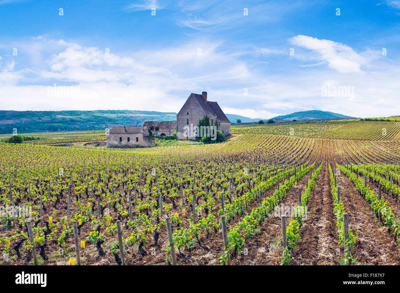 The Abbaye de Morgeot and vineyards in Chassagne-Montrachet in the Cote de Beaune, Burgundy, France - Stock Image