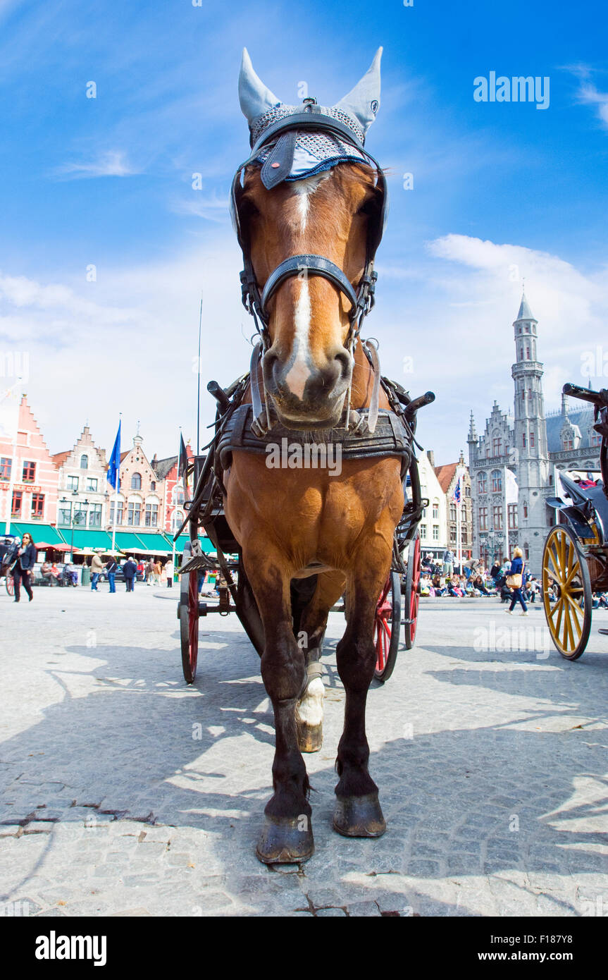 Cart horses awaiting for their next trip in the the Grote Markt in Bruges, Belgium Stock Photo