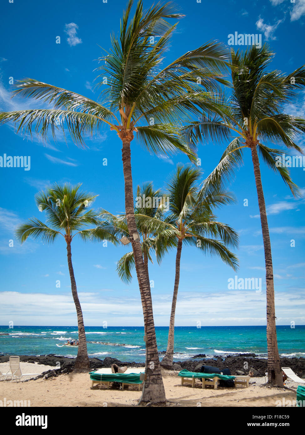 A view of coconut palms and Pauoa Bay at the Fairmont Orchid, a luxury hotel on the Kohala Coast of Hawai'i - Stock Image