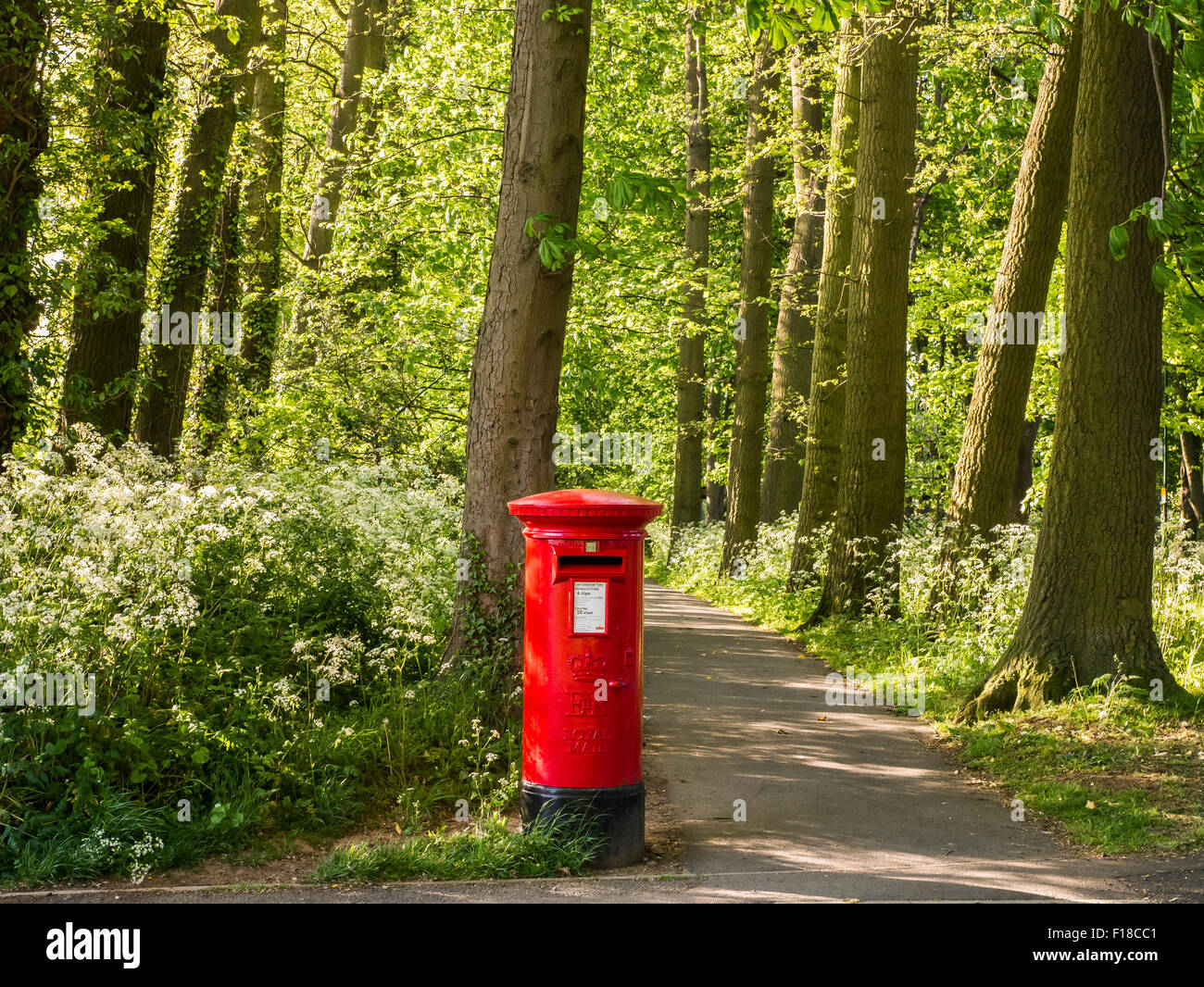 Red Pillar Box and Woodland Path - Stock Image
