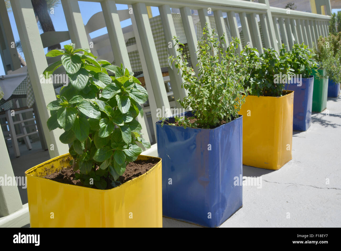 fresh herbs in colored pots Stock Photo