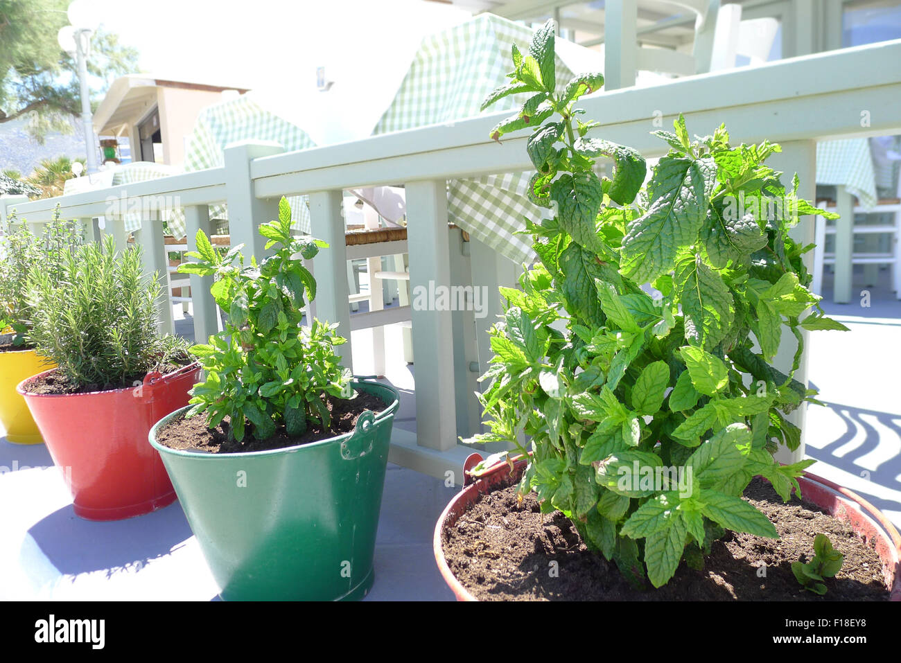 fresh herbs in colored pots - Stock Image