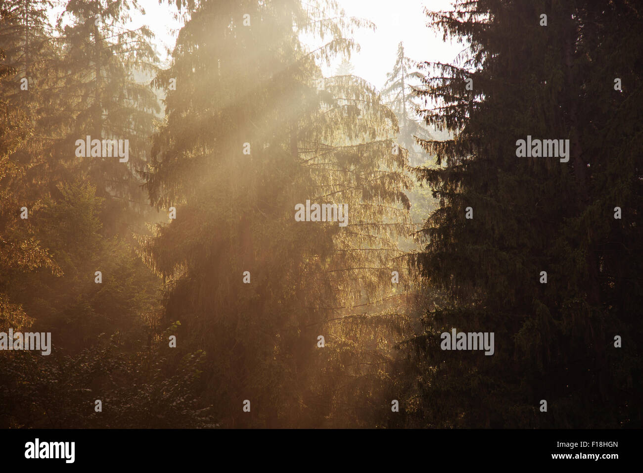 sun rise in a wood. - Stock Image