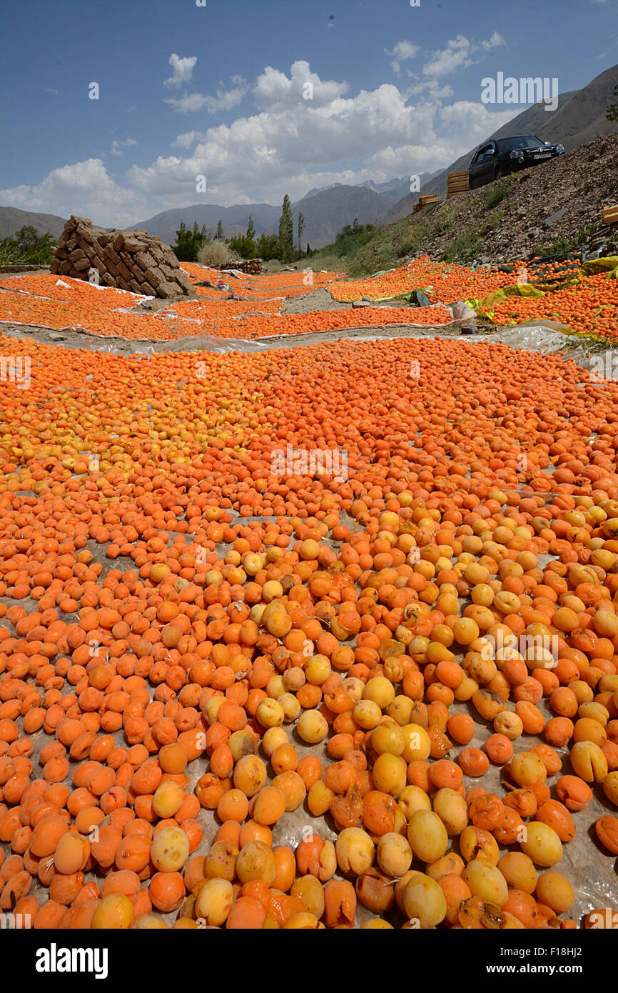 Apricots drying in the sun. Tajikistan Collection - Stock Image