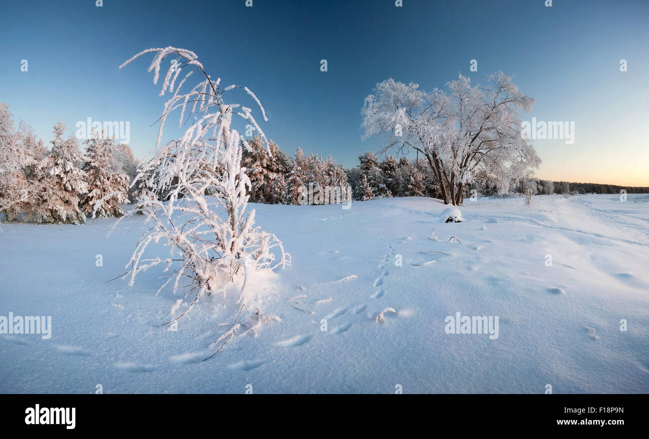 Winter with trees and tracks on the snow - Stock Image