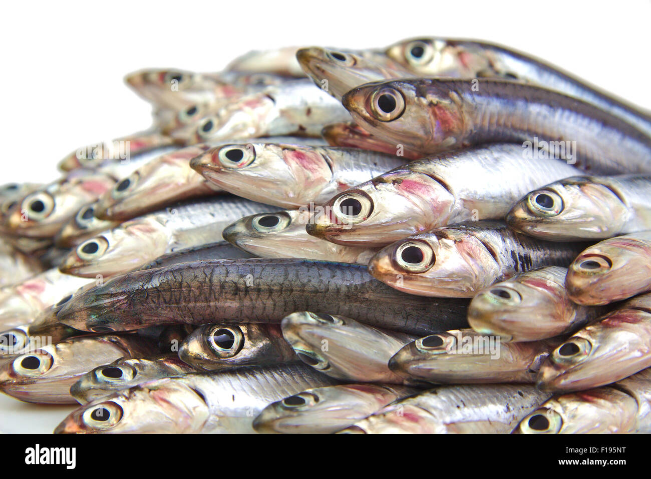 Bunch of fresh mediterranean anchovies on white background Stock Photo