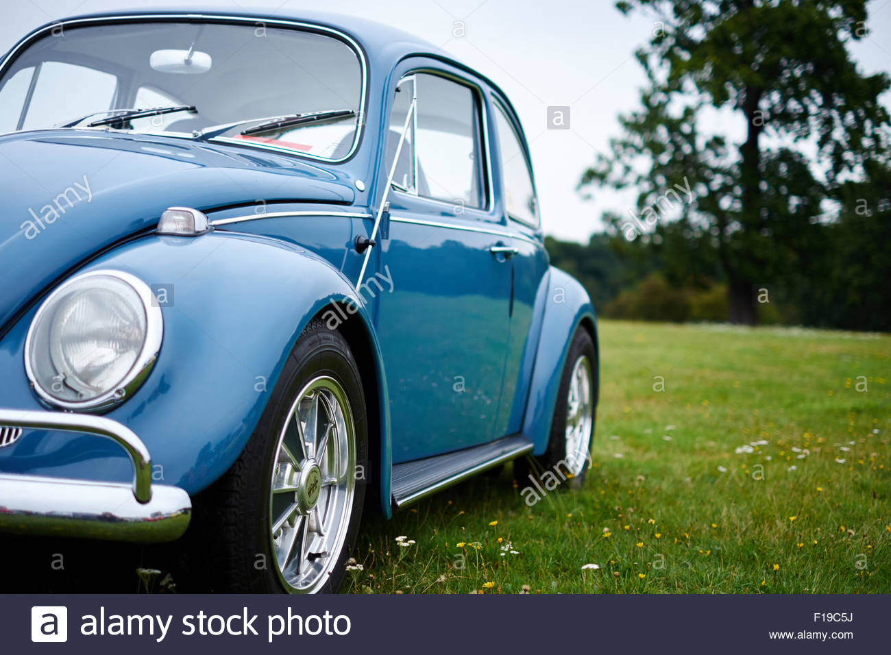 Vintage blue Volkswagen VW Beetle car on grass. - Stock Image