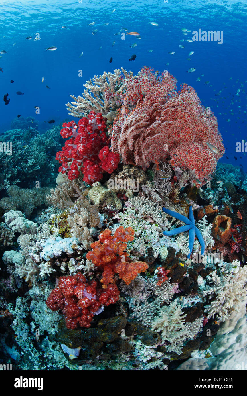px0312-D. colorful bommie covered in soft and hard corals, sea fans, sponges, tunicates and more. Indonesia, tropical - Stock Image