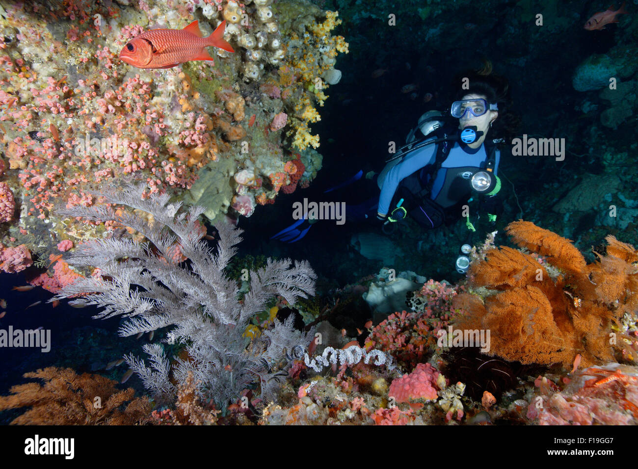 px0452-D. scuba diver (model released) explores cave adorned with black coral bushes. Indonesia, tropical Pacific - Stock Image