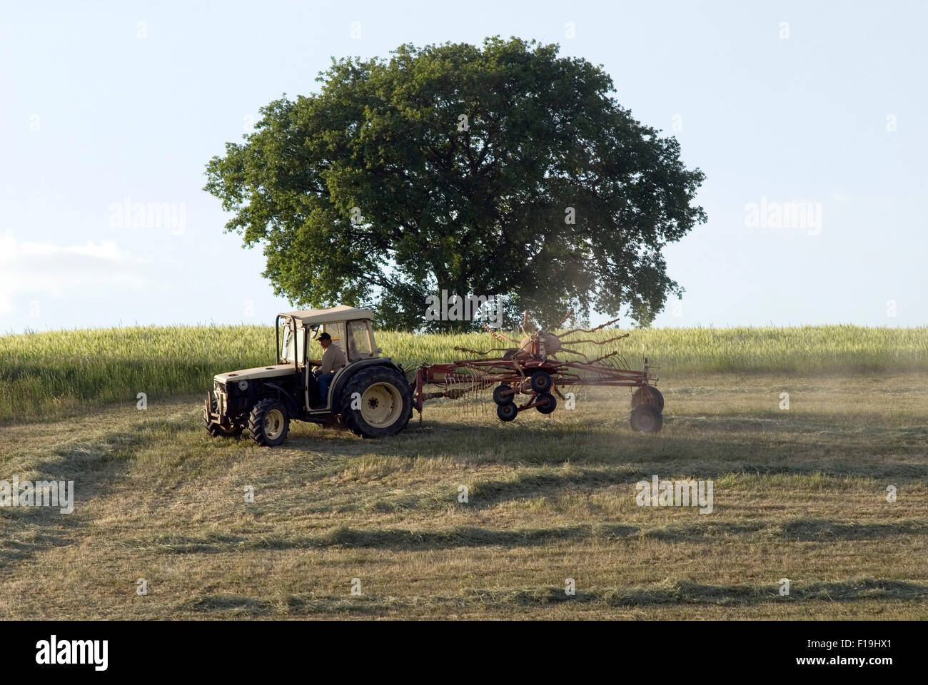 Hay Turn with tractor on summer field - Stock Image