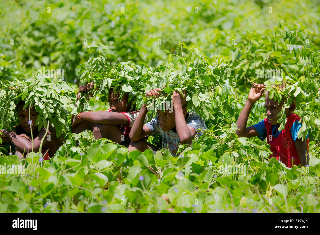 Solomon Islands, Makira-Ulawa Province, Owaraha aka Santa Ana, local boys seek shade from sun in creative way. - Stock Image