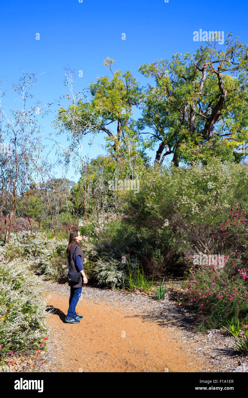 A woman looking at the wildflower displays in Kings Park botanical gardens - Stock Image