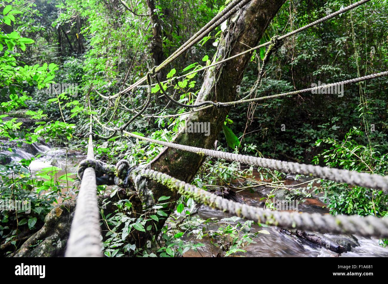 Bridge of lianas in Ivory Coast - Stock Image