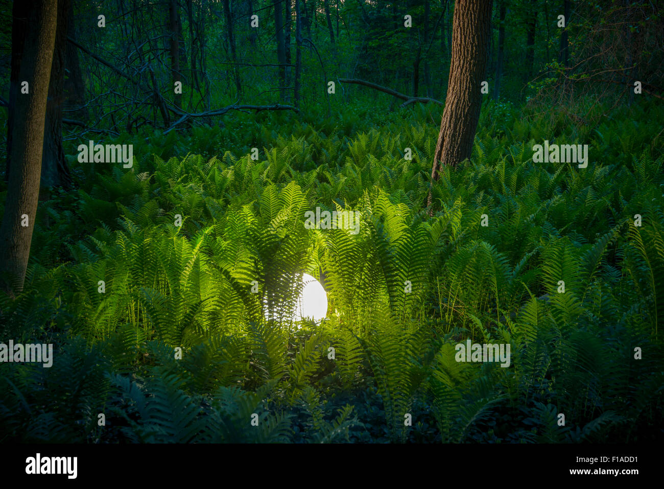 Glowing Orb In Fern Forest - Stock Image
