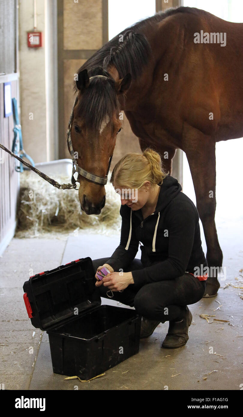 Neuenhagen, Germany, horse physiotherapist cuts an elastic therapeutic tape to - Stock Image