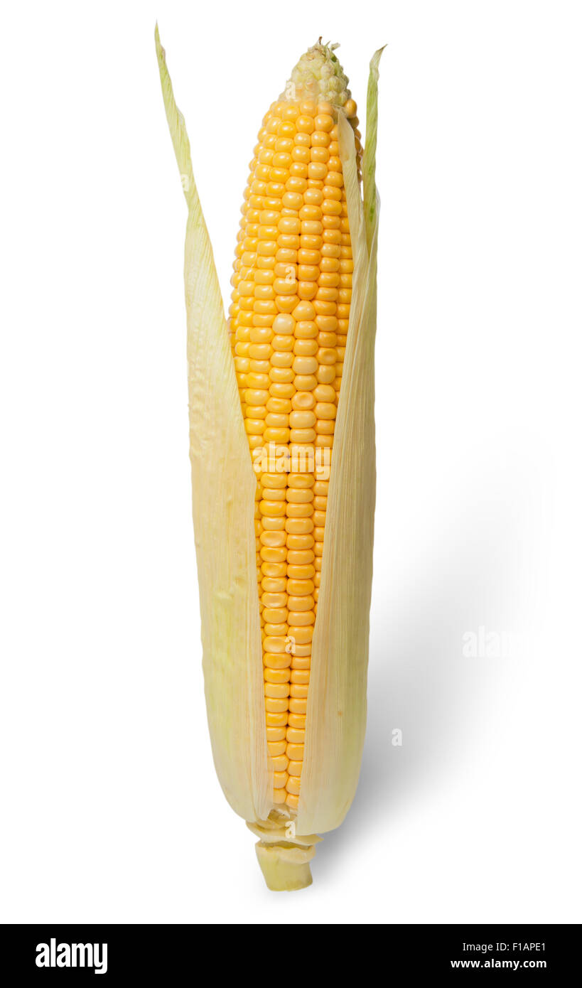 Purified ear of corn with leaves isolated on white background - Stock Image