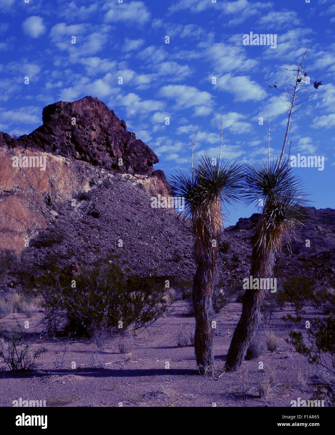Capital Reef National Park - Stock Image