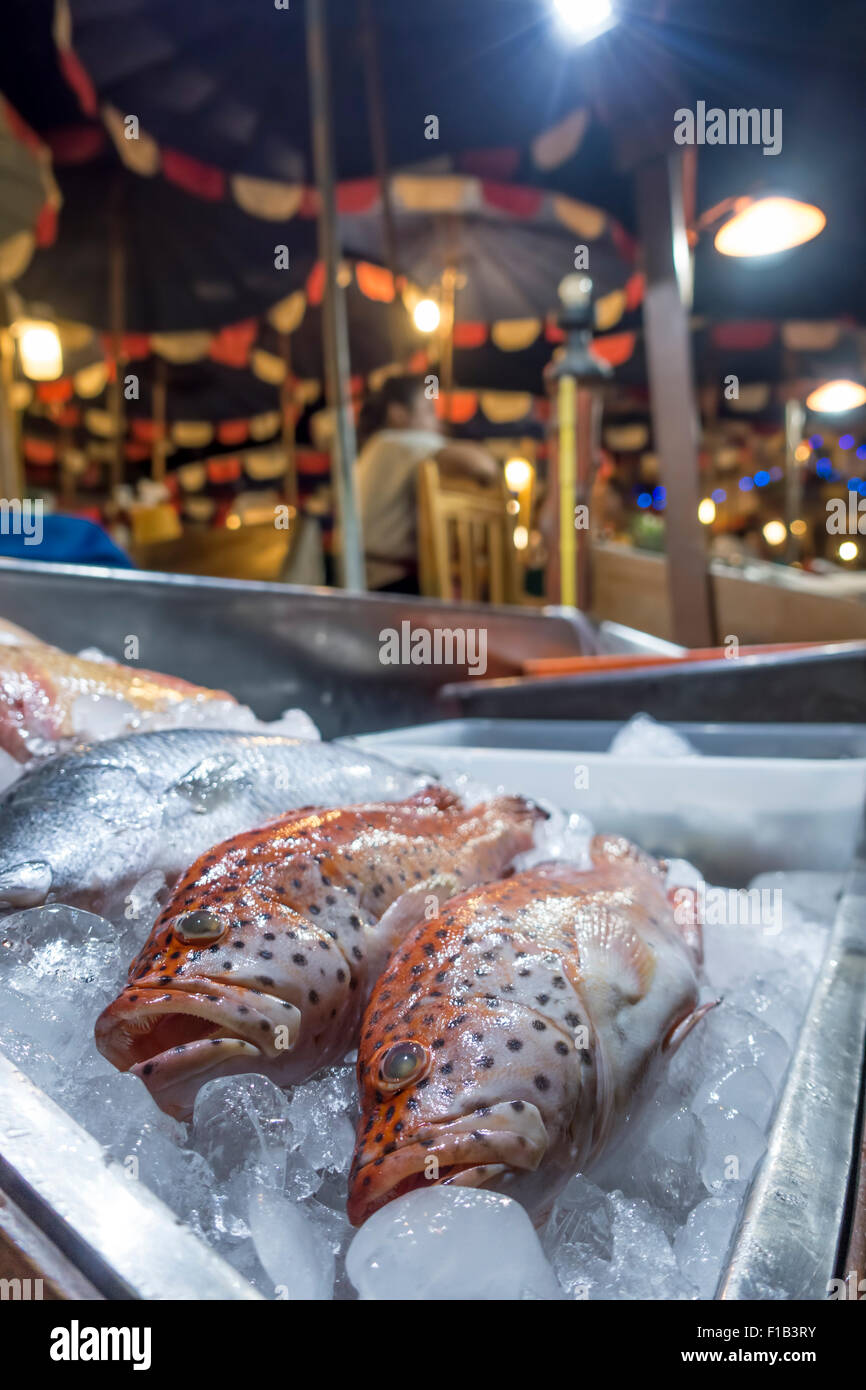 Red snapper on ice, fish on display at a restaurant, Naiharn Beach Phuket, Thailand Stock Photo