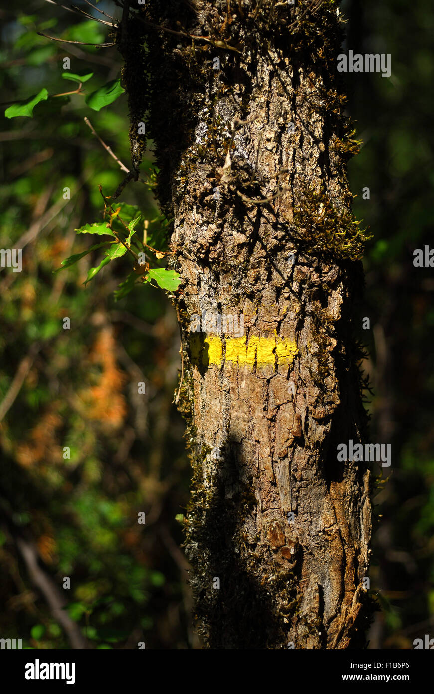 Yellow marker of Promenades et Randonnées (PRs) on tree trunk, Lot Valley Stock Photo