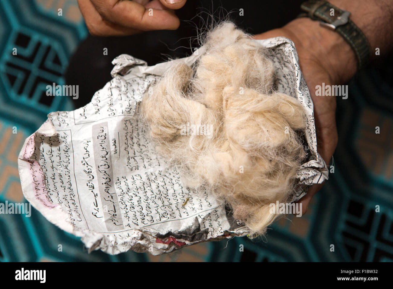 India, Jammu & Kashmir, Srinagar, unprocessed raw pashmina wool wrapped in Kashmiri language newspaper - Stock Image