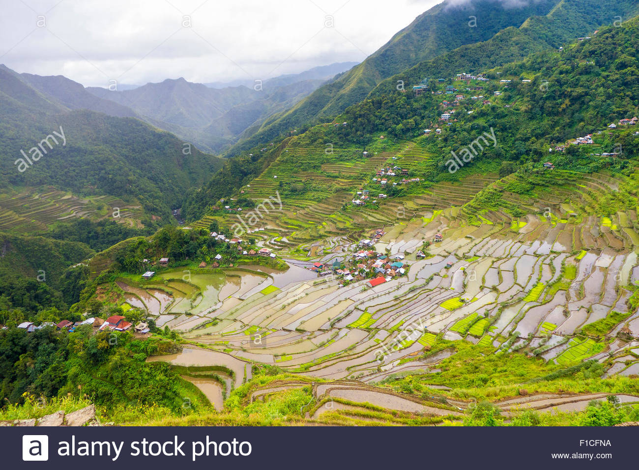 Batad rice terraces and village, Banaue, Mountain Province, Cordillera Administrative Region, Philippines - Stock Image