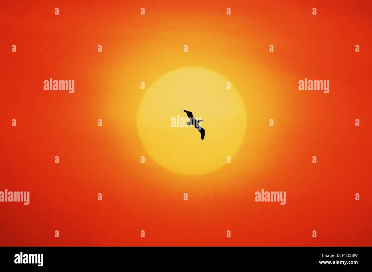 single bird in the sundown - Stock Image