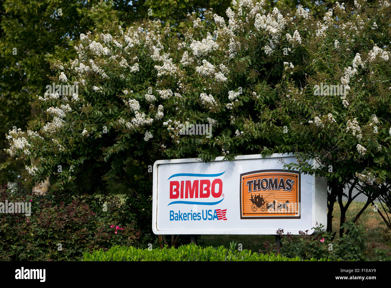 A logo sign outside of a Thomas' English Muffins bakery owned by Bimbo Bakeries USA, in Frederick, Maryland - Stock Image