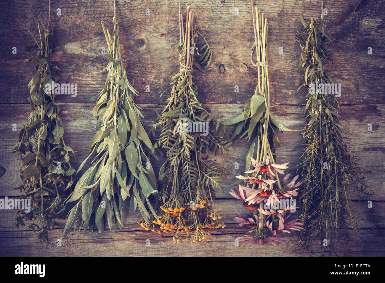 Vintage stylized photo of bunches of healing herbs on wooden wall, herbal medicine. - Stock Image