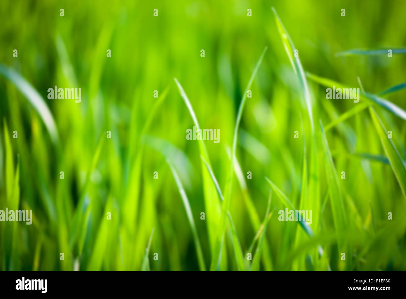 Blurred background of green grass - Stock Image