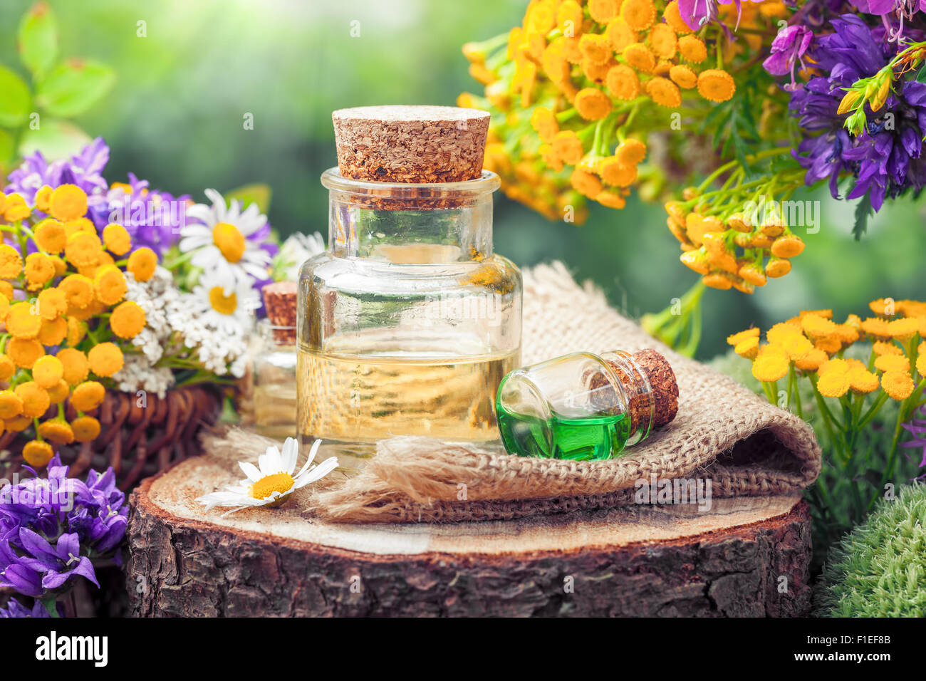 Bottles of essential oil or potion, healing herbs and wildflowers. Herbal medicine. - Stock Image
