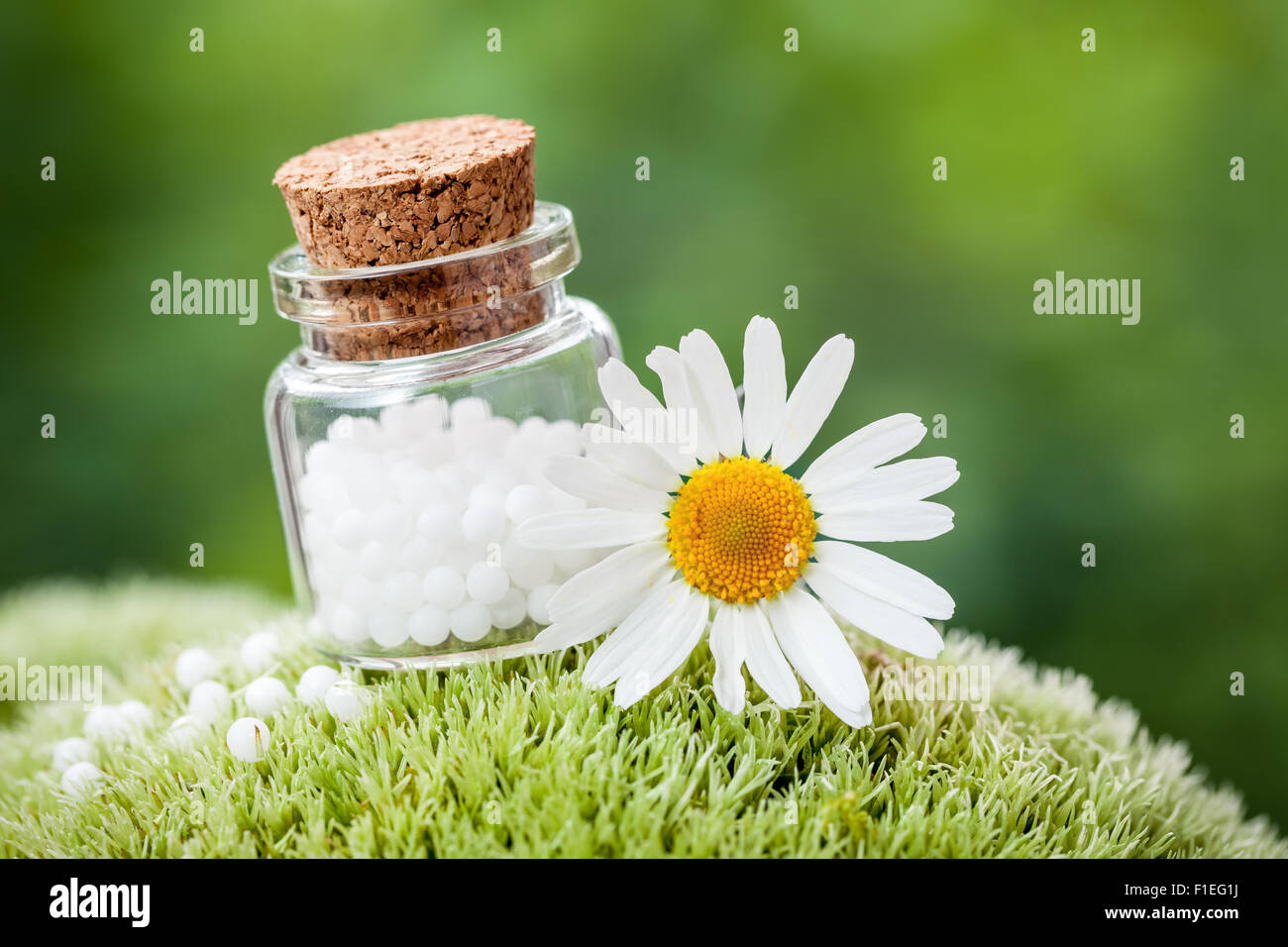 Bottle of homeopathy globules and daisy flower on green moss. - Stock Image
