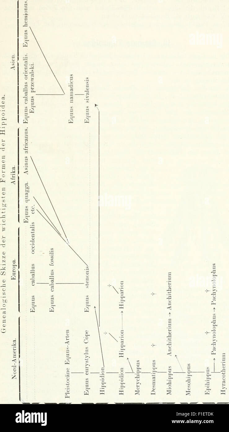 Die Säugetiere. Einführung in die Anatomie und Systematik der recenten und fossilen Mammalia (1904) Stock Photo