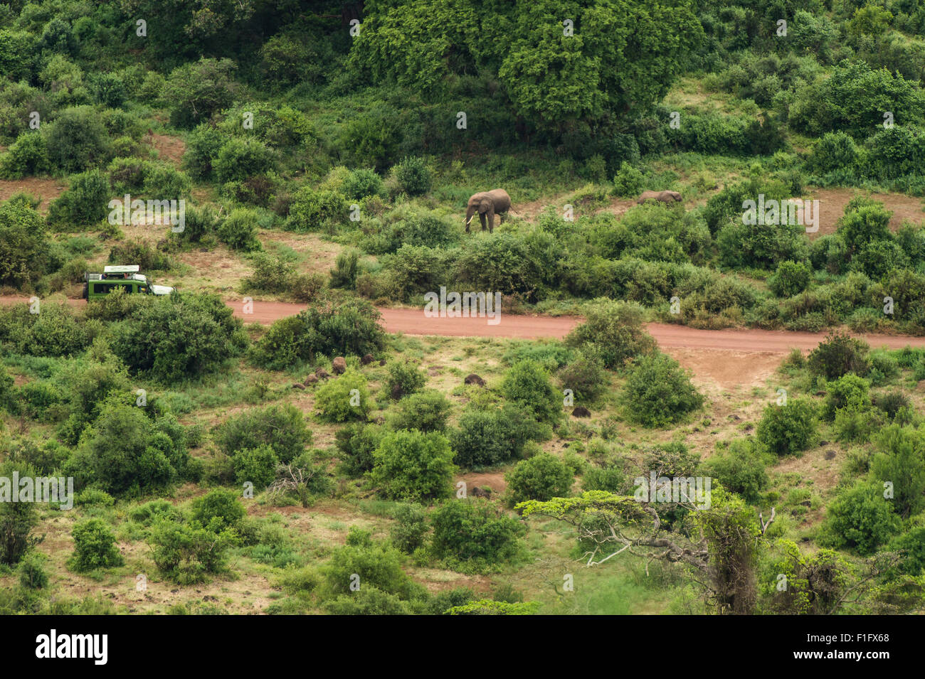 Lake Manyara, Tanzania Tourists encounter elephant on safari - Stock Image