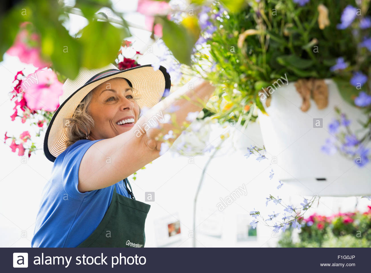 Smiling worker tending to hanging flower baskets - Stock Image