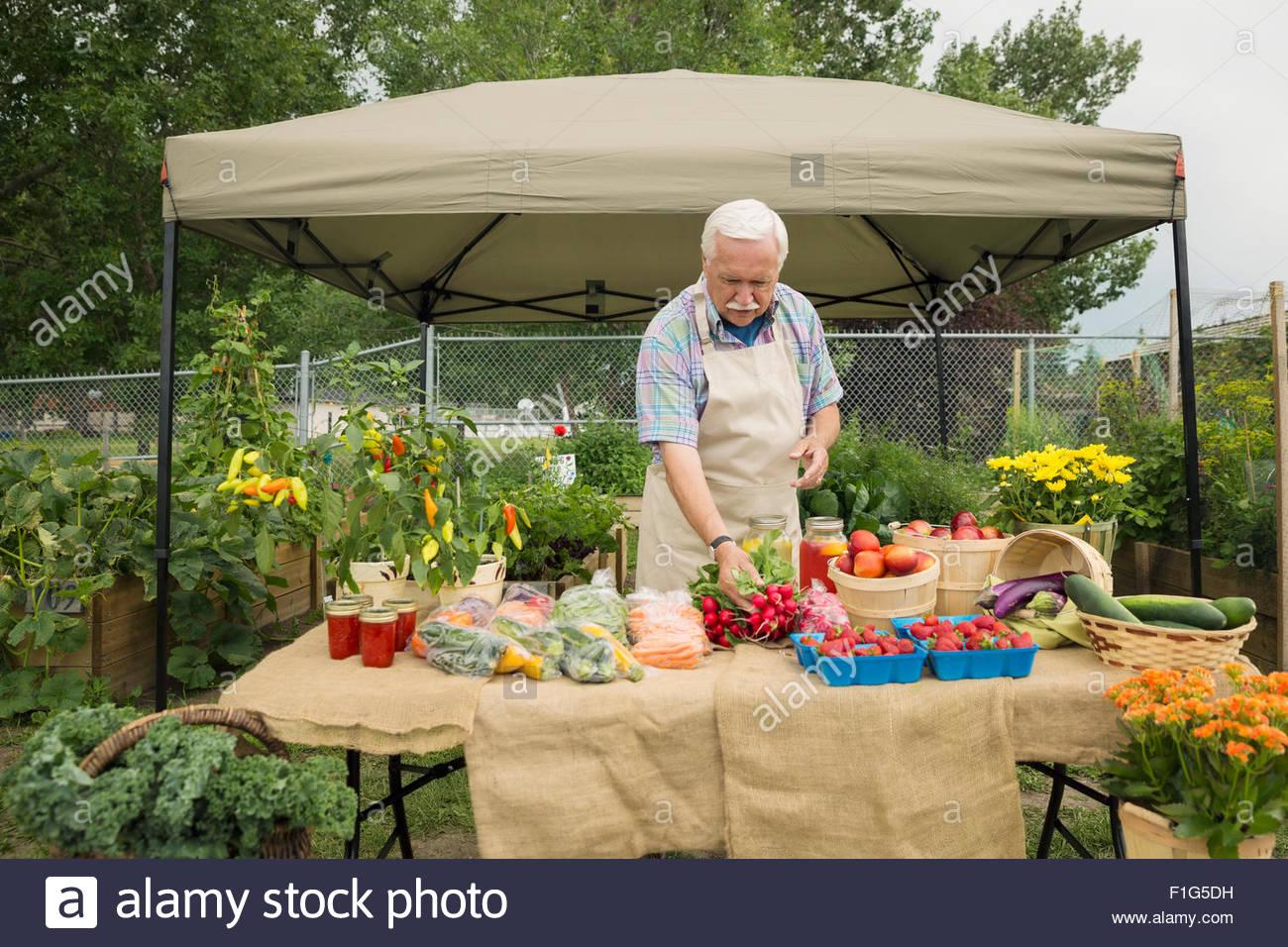 Senior farmer arranging fresh vegetables farmers market stall - Stock Image