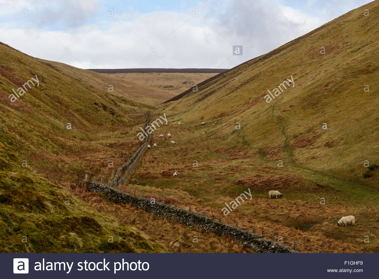 Hilly countryside near the village of Coulter in South Lanarkshire, Scotland in early-Spring. - Stock Image