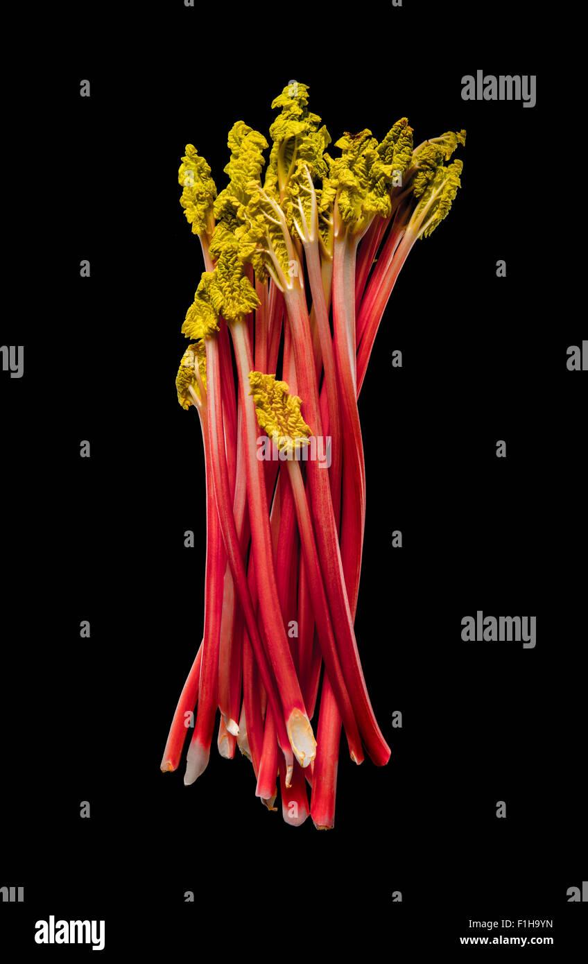rhubarb - Stock Image