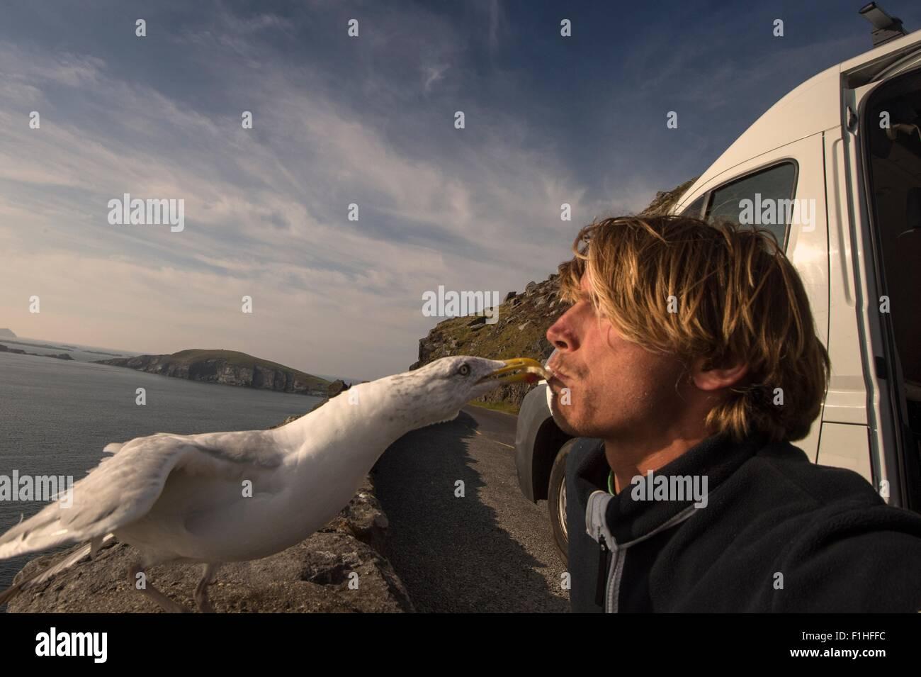 Bird taking food from man's mouth, Slea head,County Kerry, Ireland Stock Photo