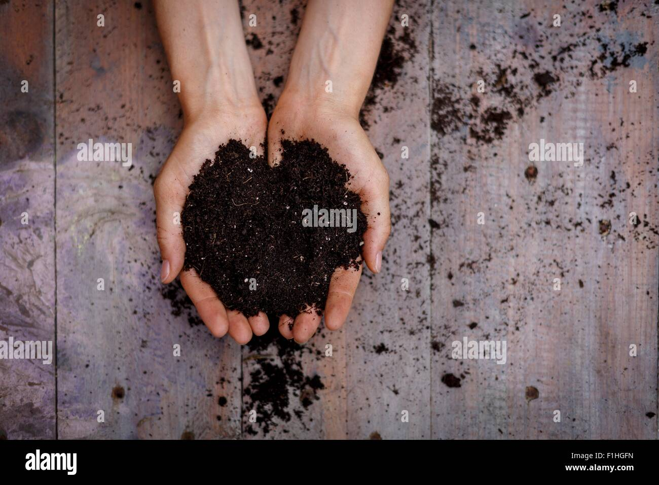 High angle view of cupped hands holding soil - Stock Image