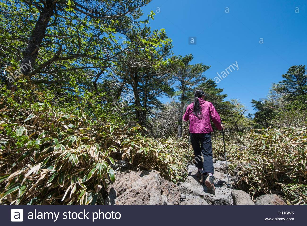 Hiker hiking up rocky trail to Hallasan the highest mountain in Korea,  Jeju Island, South Korea - Stock Image