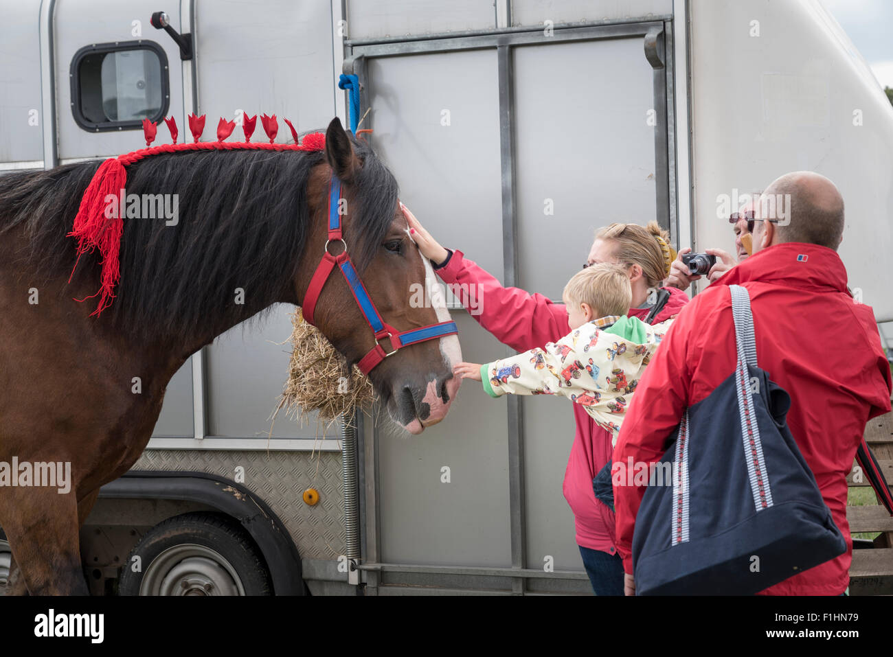Mother and child stroking heavy horse at Steam rally and Country fair Stow cum Quy Cambridgeshire England 2015 Stock Photo