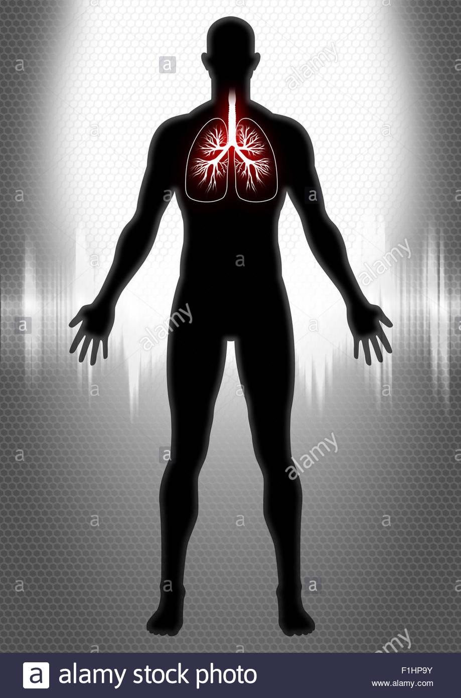 Human Pulmonary - Stock Image