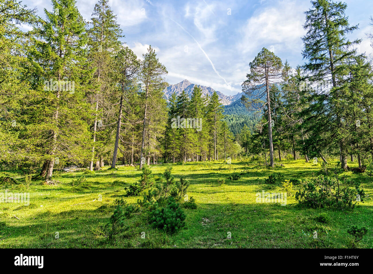 Image of the landscape with trees and alps near river Isar and Karwendel in Bavaria, Germany - Stock Image