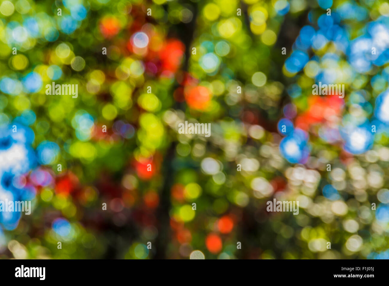 Soft focus photo of bright forest with sunlight, abstract natural background, blurred grunge image, - Stock Image