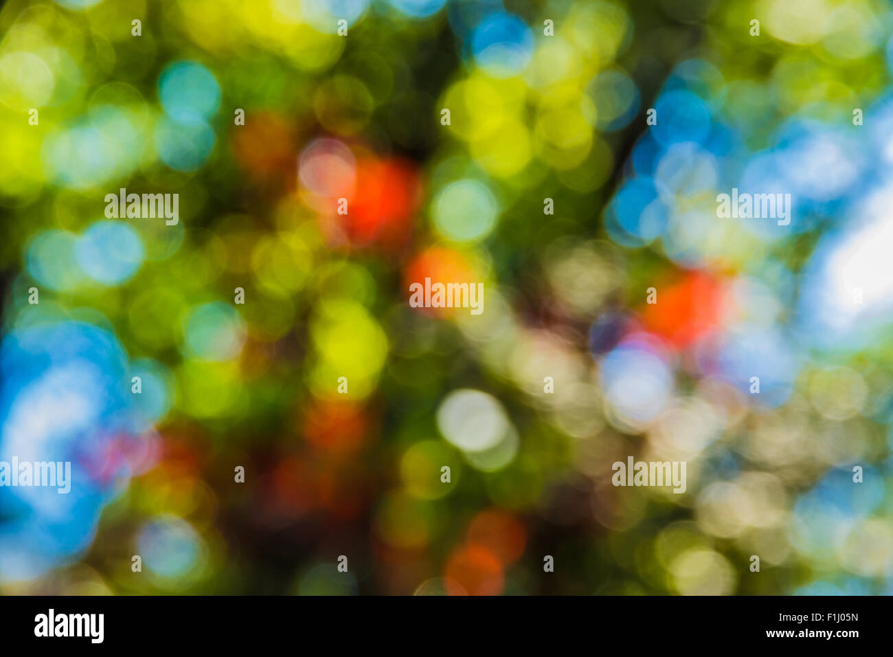 Soft focus photo of bright forest with sunlight, abstract natural background, blurred grunge image, Stock Photo